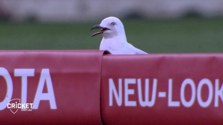 The Curious Case of Sammy Seagull