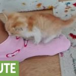 Rescued kitten can only sleep on owner's foot