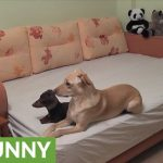 Here's what your dogs do when you're not home