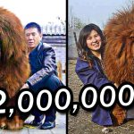 10 Most Expensive Pets In The World