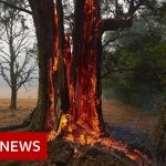 Australia fires: The animals struggling in the crisis  - BBC News