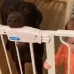 Pawshank Redemption: Watch this dog help a baby escape together