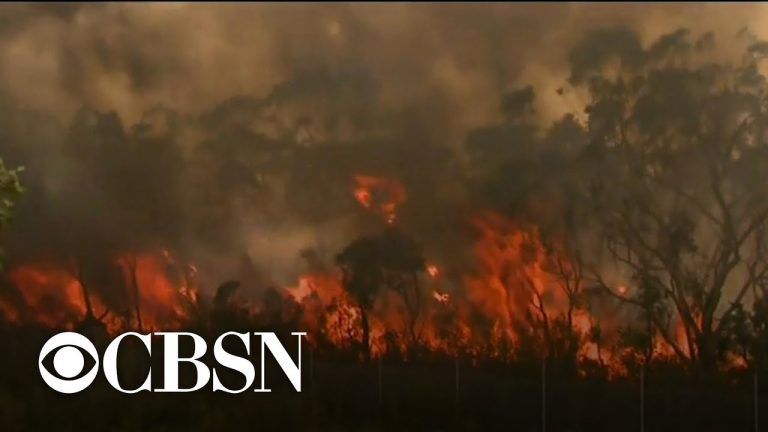 Rain and cooler temperatures bring some relief from Australia fires