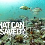 Safeguarding the Seas - Episode 11 | What Can Be Saved? | Associated Press