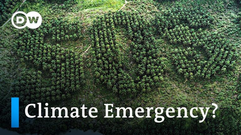 11,000 scientists warn of climate emergency and demand radical action | DW News