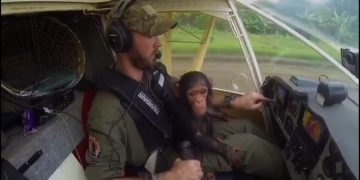Rescued Chimp Helps Out on Flight over Africa