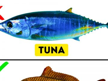 9 Kinds of Fish You Should Never Eat