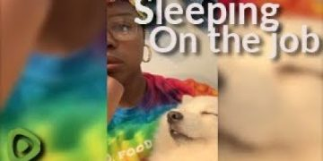 """This woman's """"assistant"""" falls asleep on the job"""
