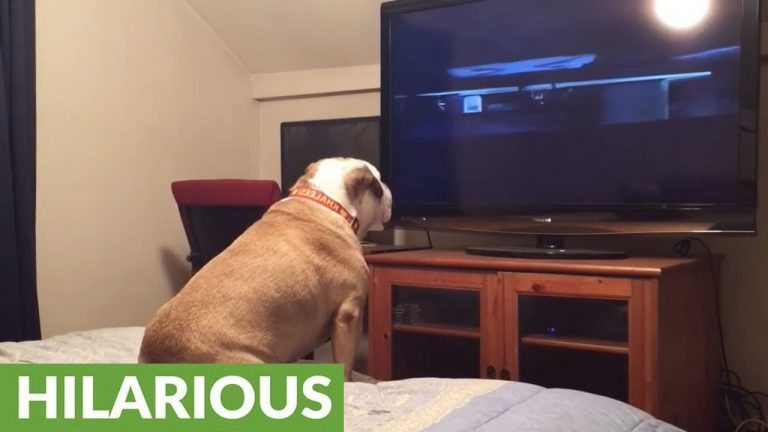 Bulldog watches horror movie, does something incredible during scary scene