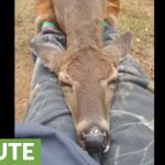 Wild deer adorably naps on woman's lap
