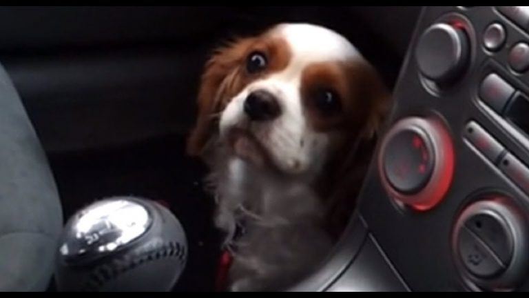 "Dog's priceless ""puppy face"" reaction after realizing she's at vet"