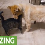 Cat's emotional reaction to reunion with blind dog