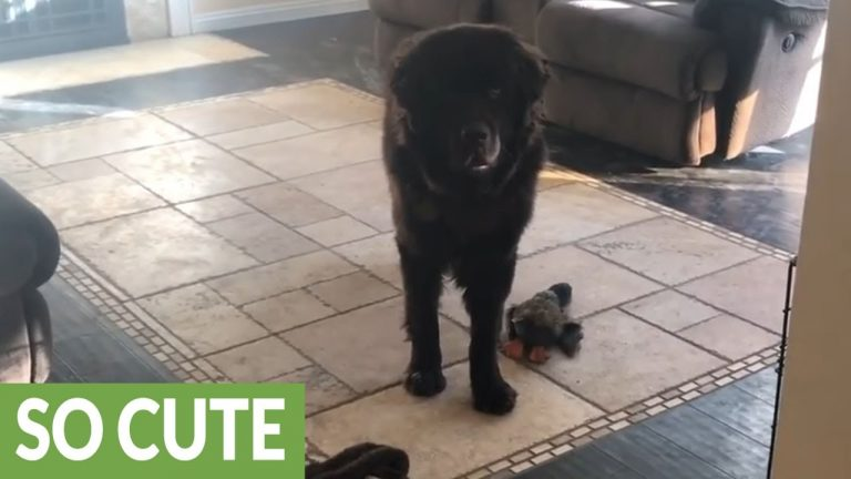 Girl goes to school, dog experiences separation crisis
