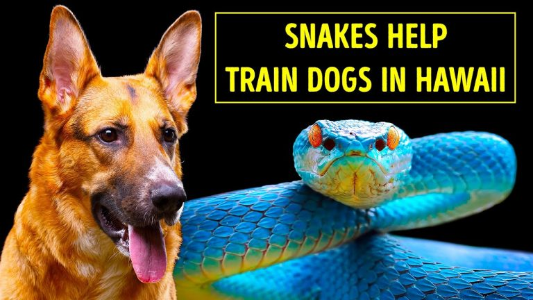 Are There Snakes in Hawaii? Turns Out Yes But Special