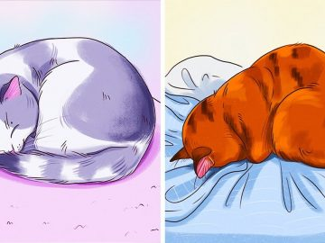 What a Sleeping Position Reveals About Your Cat
