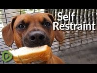 This dog shows mind-blowing restraint by holding a sandwich in its mouth