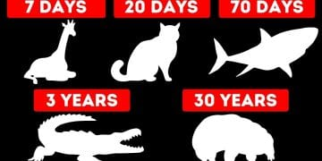 How Long Animals Can Go Without Food