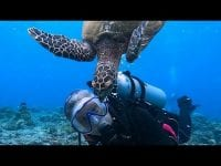 "Jealous sea turtle chases smaller turtle away from ""his scuba diver"""