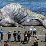 The LARGEST Animals Ever Recorded