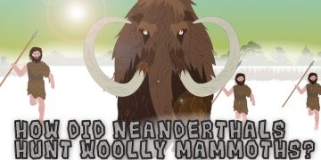 How did Neanderthals Hunt Woolly Mammoths?