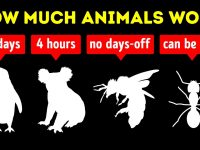 What Animals Work Harder Than Us
