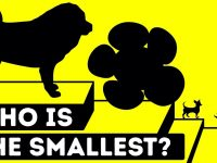 The Smallest Creatures In The World Ever