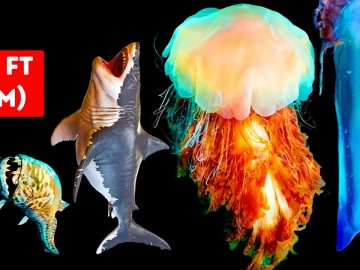 Dangerous Sea Creatures Bigger Than Megalodon