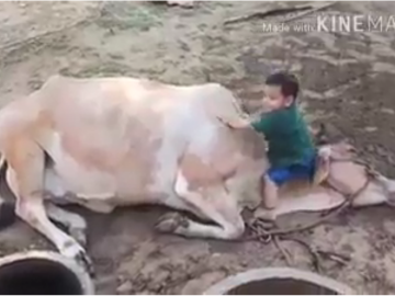Love with Animals 9