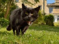 Pet cat diagnosed with Covid-19 in first UK case of animal infection 2