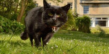 Pet cat diagnosed with Covid-19 in first UK case of animal infection 17
