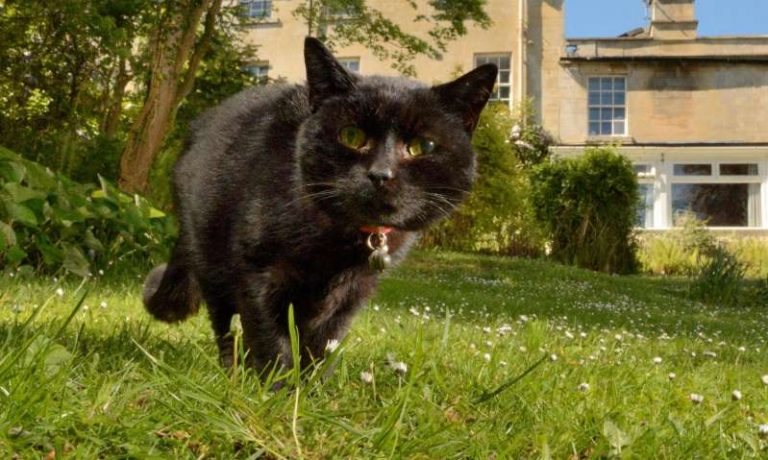 Pet cat diagnosed with Covid-19 in first UK case of animal infection 1
