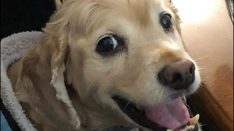 Dog's priceless reaction after owner stops petting him