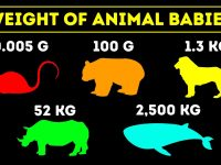 Comparison: The Biggest and Smalles Animal Babies