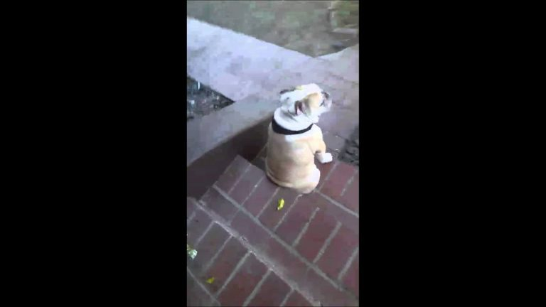 Sad dog sits on porch waiting for owner