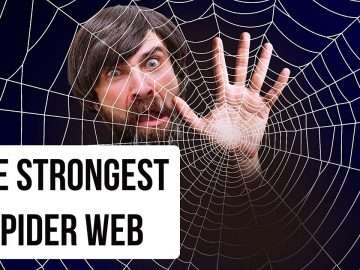 What If You Get into the Biggest Spider Web in the World
