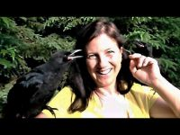 Rescued baby crows captured the hearts of a veterinarian and her family