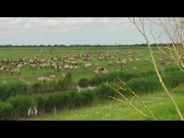Awesome time lapse of gigantic herd of wild konik horses