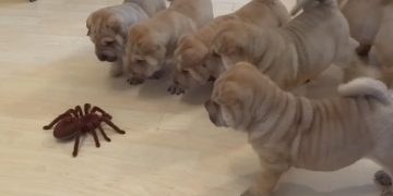 Happy Puppies Doing Funny Things | June 2020