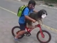 Little boy rides bicycle with his doggy best friend