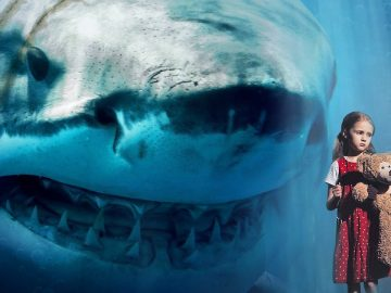 Megalodons Have Been Sighted All Around The World?