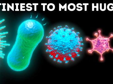 Microbes From Smallest to Largest