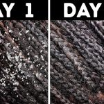 10+ Natural Ways to Get Rid of Dandruff Quickly at Home
