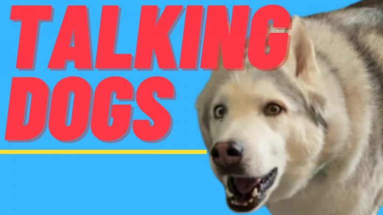 Hilarious Talking Dogs Caught On Camera | Funny Dogs Compilation
