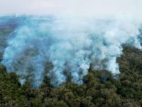 Brazil firefighters race to contain wetland blazes 9