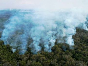 Brazil firefighters race to contain wetland blazes 11