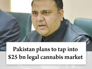 #Pakistan plans to tap into $25 bn legal #cannabis market  Read more:   #TheNews... 5