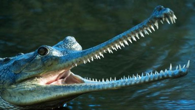 10 Creatures You Didn't Know Existed