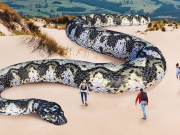 10 Largest Snakes in the World Discovered