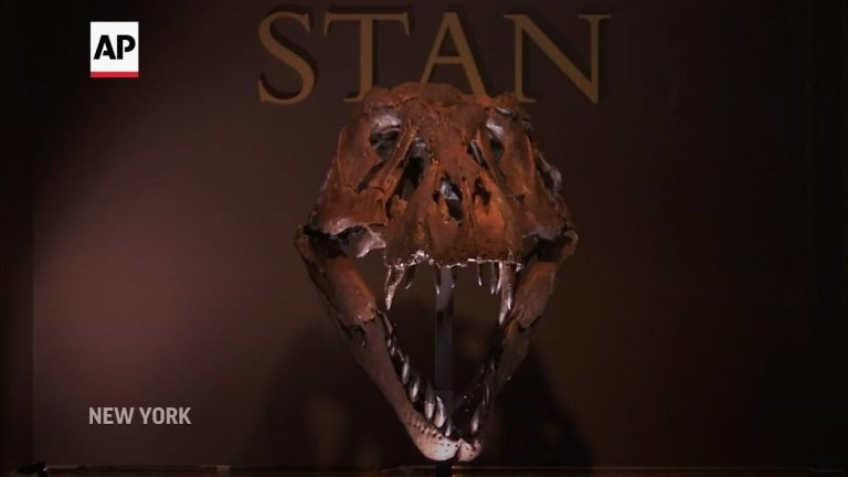 Famous T-rex goes up for auction
