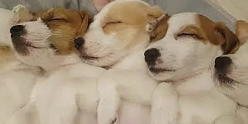 These Sleeping Puppies Will Totally Melt Your Heart